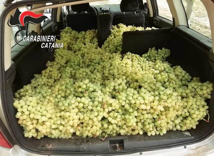 Ladri di uva catturati in trasferta: due arresti a Licodia Eubea