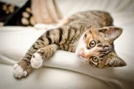 Uccide un gatto per mangiarselo: 50enne denunciato a Canicattì