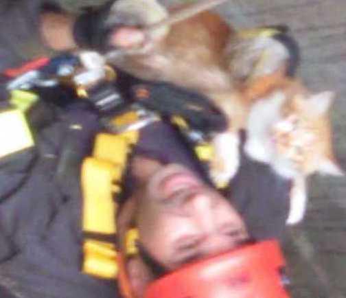I vigili del fuoco di Ragusa salvano un gatto finito dentro un pozzo
