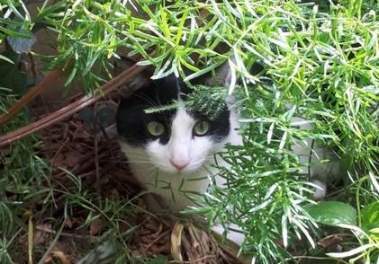 Piazza Armerina, prese a calci un gatto: condannato a 10 mila euro di multa