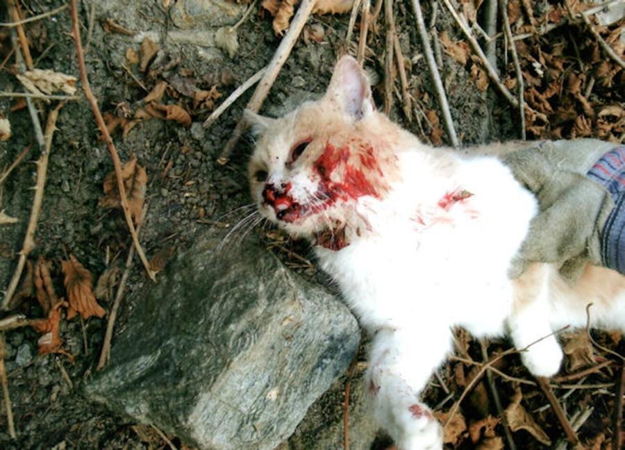 Protezione animali mette una taglia per chi uccide i gatti a Marsala