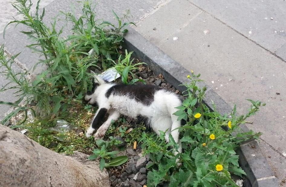 Siracusa, da una settimana un gatto morto in un'aiuola di Ortigia