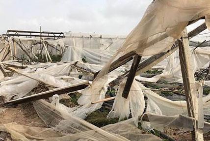 Maltempo, ingenti danni all'agricoltura a Pachino e nel Sud est: serre distrutte per il vento