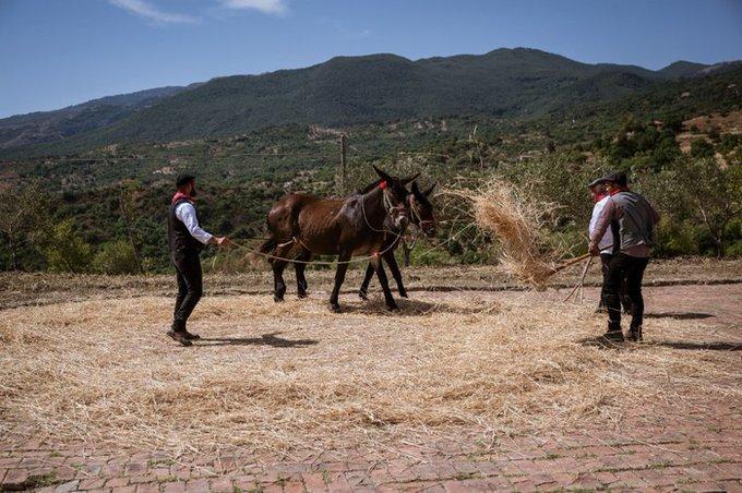 Festa del grano a Castelbuono: da un'idea di Nicola Fiasconaro