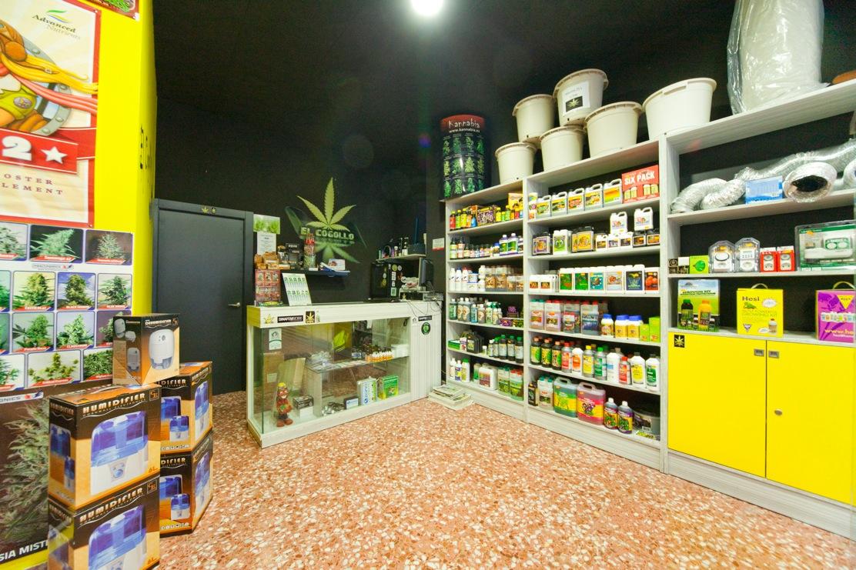 Catania, il Nas arresta titolare di un Grow Shop per spaccio di droga