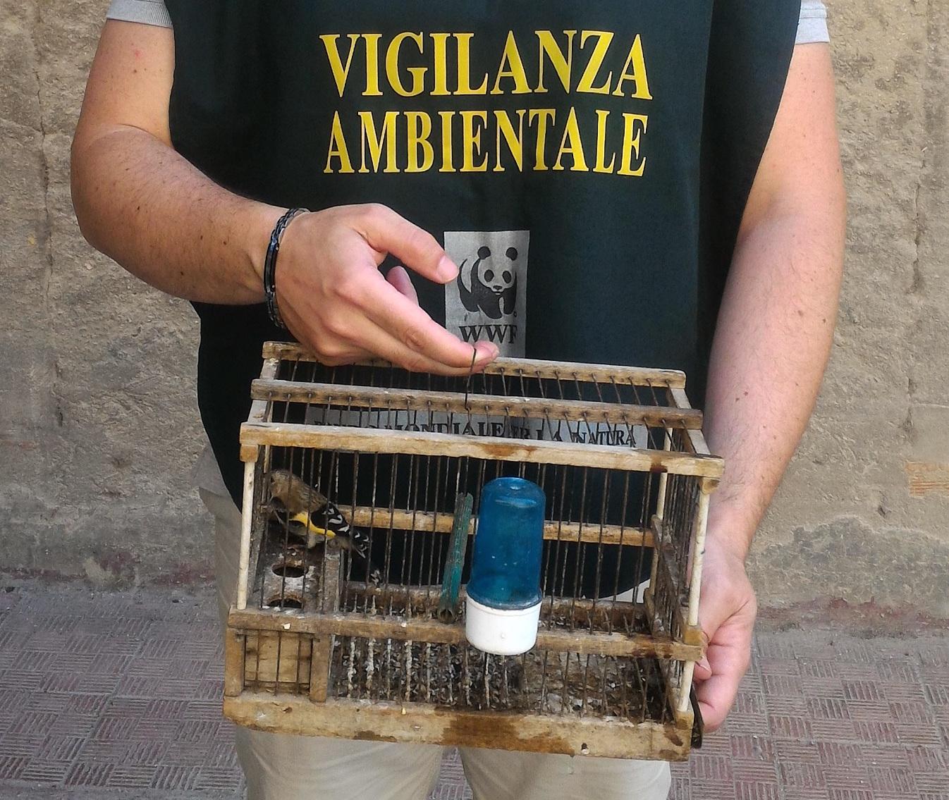 Stroncato un mercato clandestino di cardellini a Favara, 5 denunce