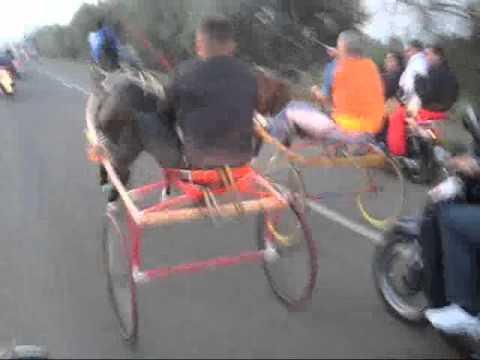 Palagonia, corsa di cavalli clandestina: 4 denunce e una multa salata