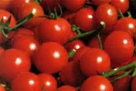 Pachino Igp, manca la tutela del pomodorino negli accordi tra Ue e Cina