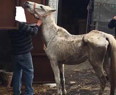 Catania, cavalli e cani in grave stato di denutrizione: una denuncia