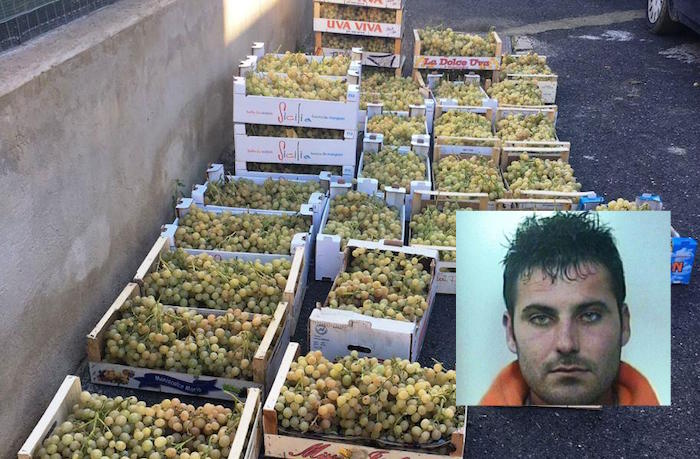 Catania, sorpresi a rubare 600 chili di uva: arrestati