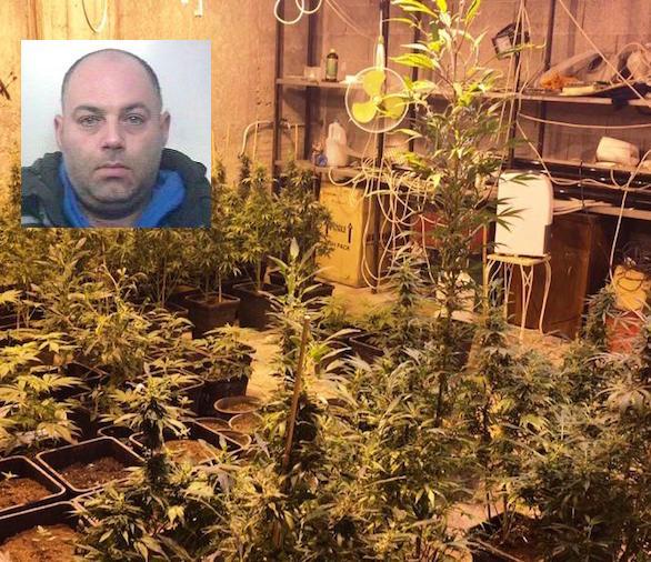 "Paternò, un garage trasformato in una ""serra"" di marijuana: un arresto"