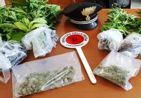Coltivava cannabis a San Gregorio, giovane cuoco in manette