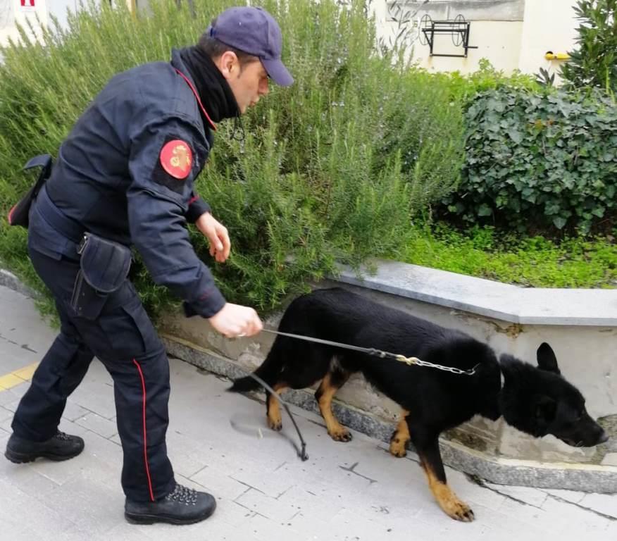 Riposto, lancia la droga sul tetto di casa: il cane antidroga la trova