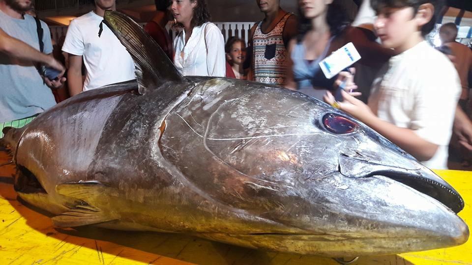 Sagra del tonno e della ghiotta ad Avola
