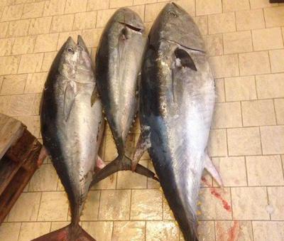 Tonno rosso, tre pescati sebbene il divieto: sequestro a Siracusa