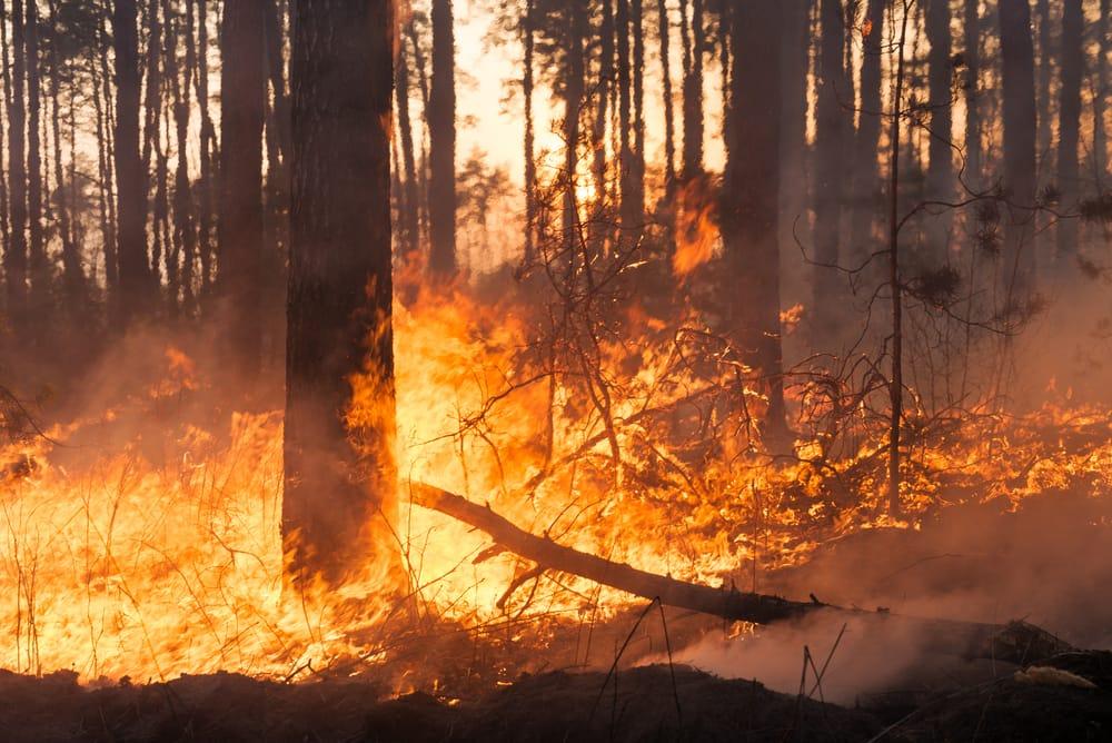 Incendi: Protezione Civile, al via la campagna estiva