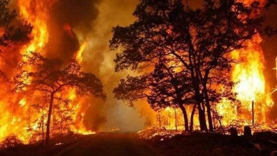 Incendi: 7 mila interventi in Sicilia in estate, boschi in salvo