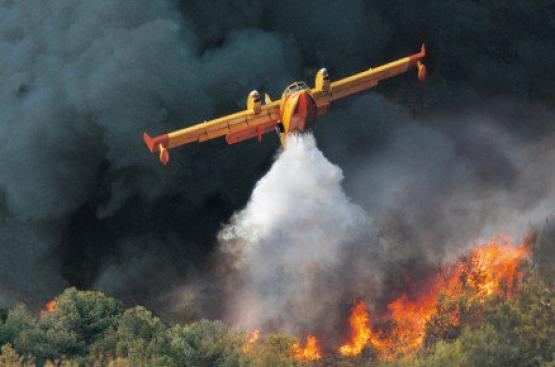 Incendi, Verdi Sicilia: