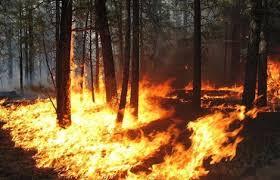 Villarosa, incendio boschivo: arrestato il presunto autore