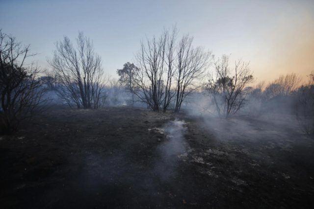 Coldiretti lancia #preservesicily, un piano di risanamento delle zone incendiate