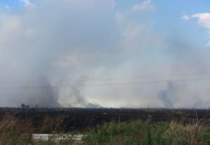 Catania, l'Oasi del Simeto devastata dall'incendio di ieri