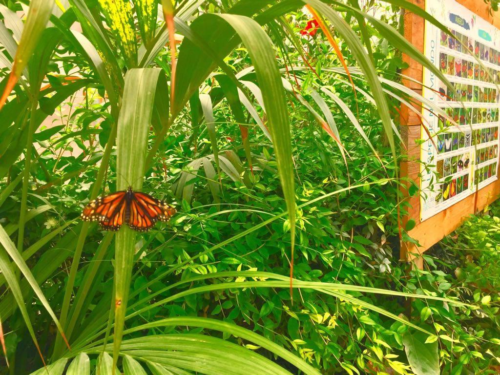 Siracusa, prorogata la Casa delle Farfalle in Ortigia: fino al 15 luglio