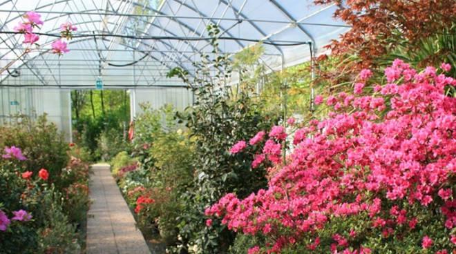Marsala, il settore florovivaistico chiede lo stato di calamità