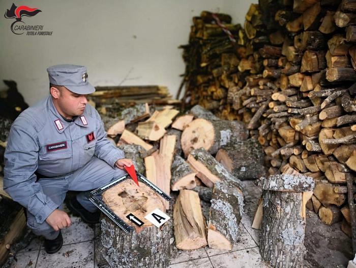 Corigliano Rossano, rubata legna in un terreno demaniale: due denunciati