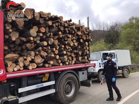 Nel bosco a tagliare legna: quattro sanzionati nel Cosentino