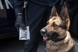 Cane antidroga incastra un presunto spacciatore a Palermo