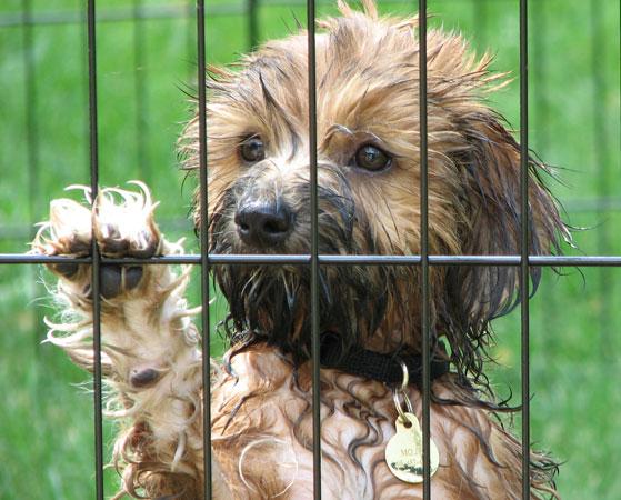 Siracusa, premialità per chi adotta un cane randagio