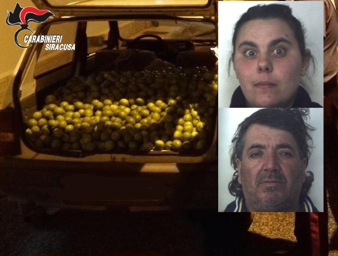 Siracusa, beccati con 500 chili di agrumi rubati: due arresti