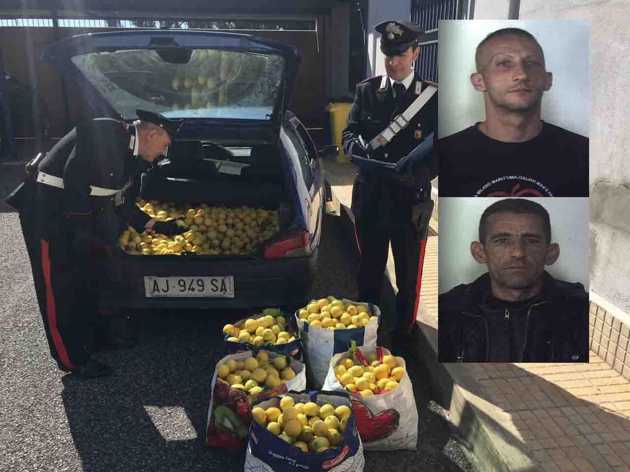 Siracusa, bloccati in un'azienda agricola dove stavano rubando limoni