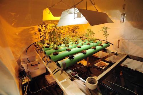 Droga: coltiva marijuana rubando luce, arrestato nel Palermitano