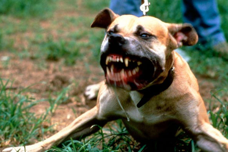 Ragazza azzannata da un cane a Palermo, le stacca un pezzo di braccio