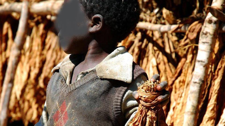 Linguaglossa, vini siciliani all'asta per aiutare i bambini del Malawi