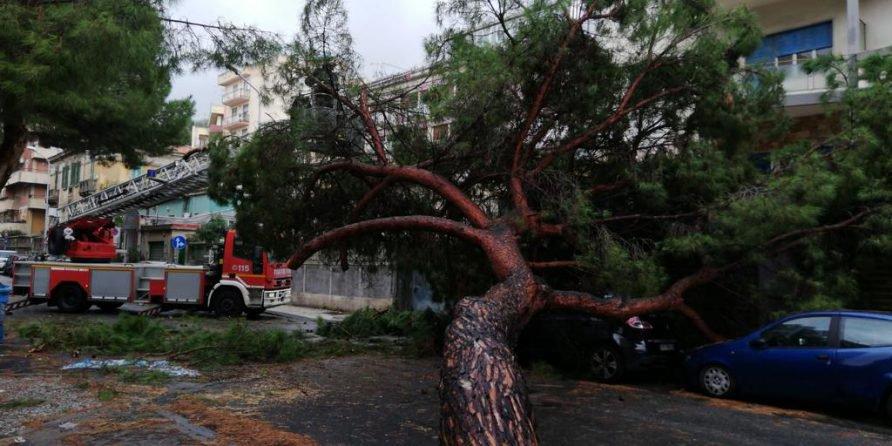 Maltempo: alberi abbattuti dal forte vento a Palermo, un ferito