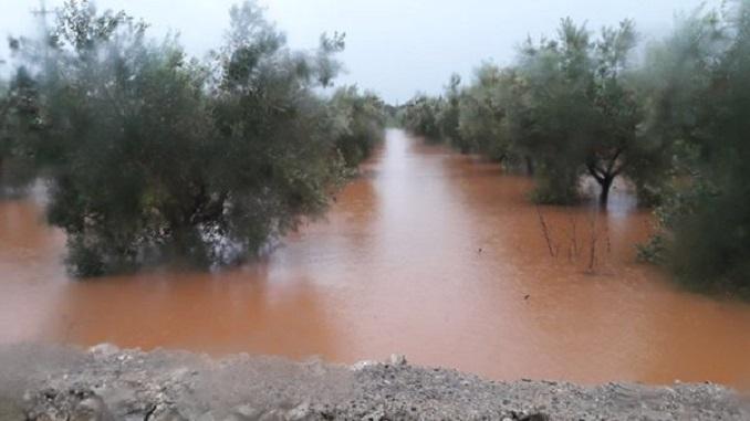 """Maltempo: Coldiretti, """"in Sicilia campi come paludi, danni ingenti"""""""