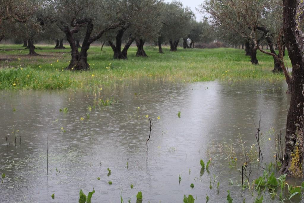 """Maltempo, Coldiretti e Confagricoltura: """"Produzioni agricole devastate in Sicilia"""""""