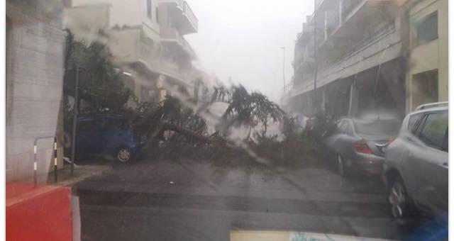 Maltempo, il forte vento abbatte alberi e pali nel Salento