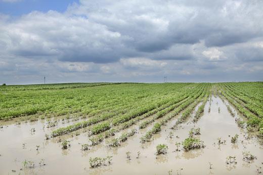 """Maltempo a Rosolini, """"Si risarciscano i danni agli agricoltori"""""""