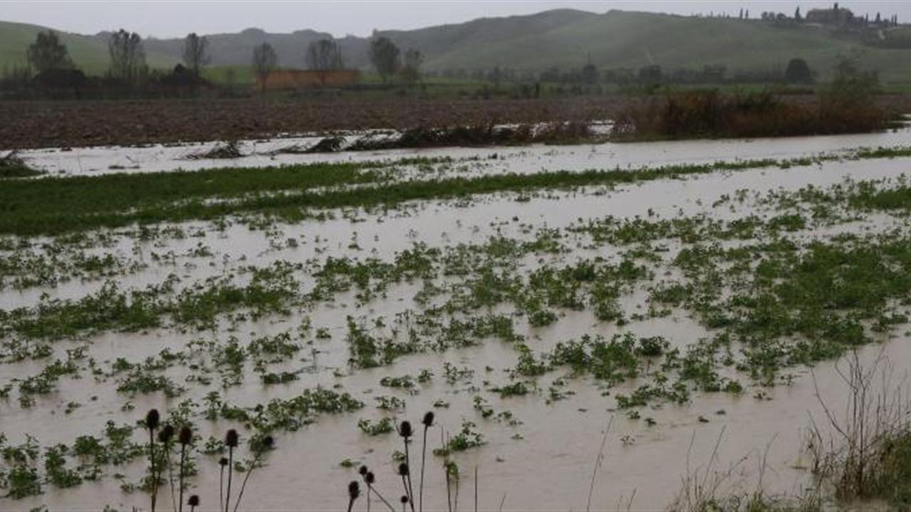 Maltempo: Coldiretti Calabria, danni per 5 milioni all'agricoltura