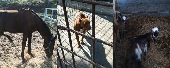 Animali maltrattati in un maneggio abusivo, sequestro a Catania