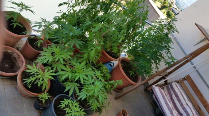 Coltivava marijuana in balcone: un arresto a Ruvo di Puglia