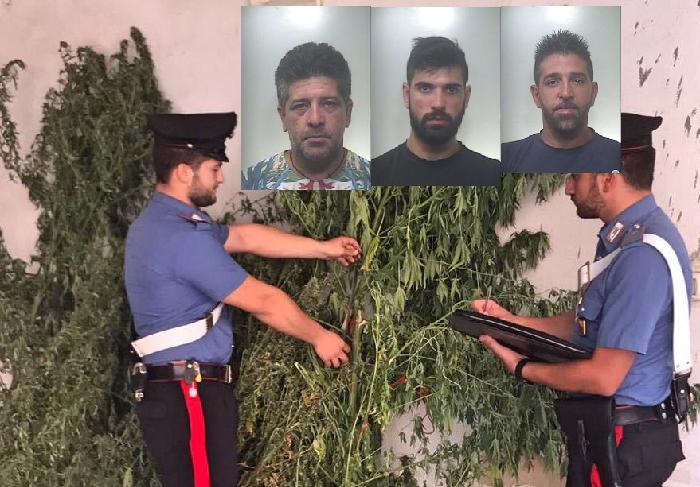 """Coltivavano """"Skunk"""", arrestati 3 fratelli di Francofonte"""