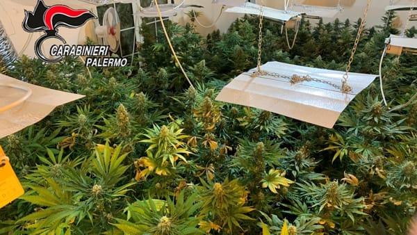 Coltivavano marijuana in una villetta, tre arresti a Palermo