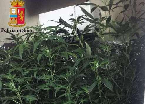 Palermo, era agli arresti domiciliari ma in casa coltivava marijuana
