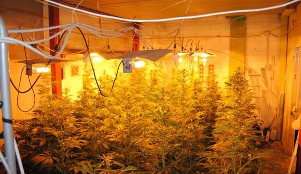 Droga, una coltivazione marijuana in un casolare di Catania