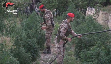 Coltivavano marijuana a Centuripe, due persone arrestate