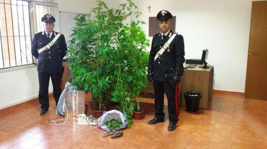 Palermo, aveva allestito una serra di marijuana: obbligo di firma